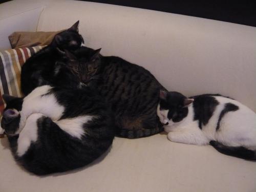 モアニとオラとラーとレア