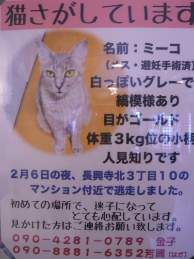 長興寺北 迷子猫ミーコちゃん