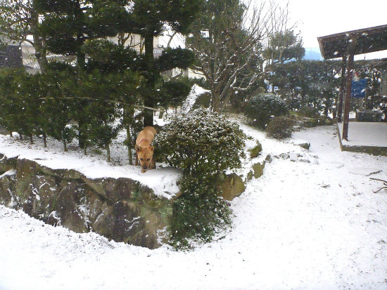 2016.01.25雪3