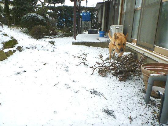 2016.01.25雪1