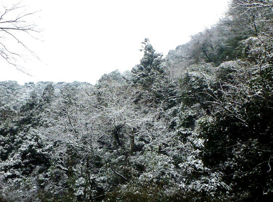 2016.01.25雪6