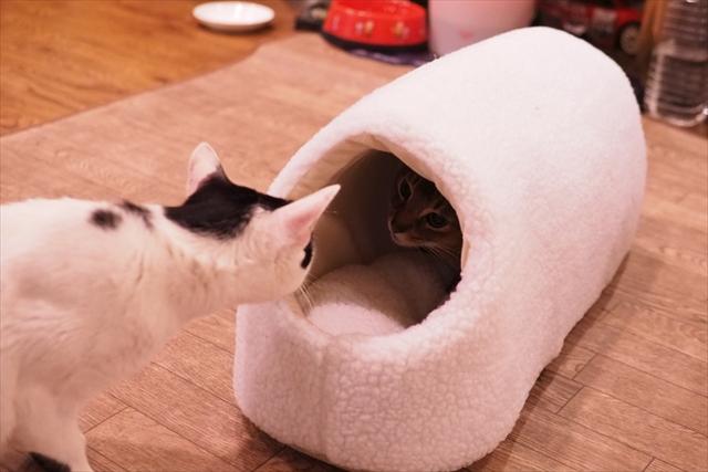 160121猫ハウス2