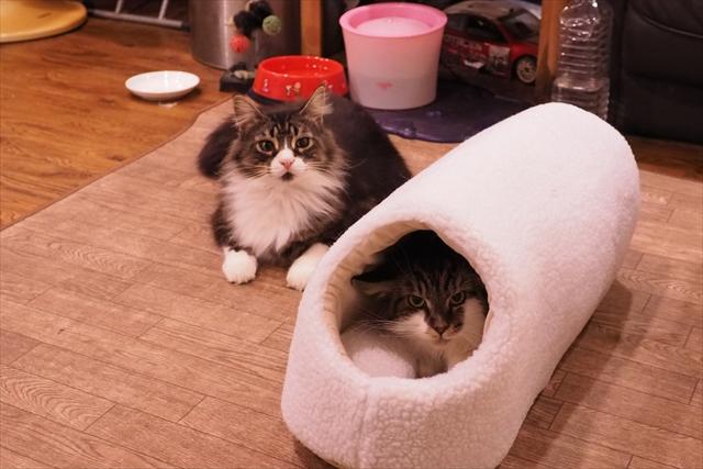 160121猫ハウス ヤルモ