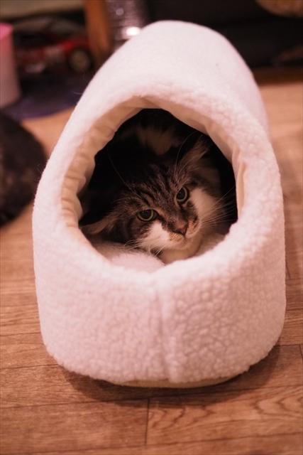 160121猫ハウス メイ
