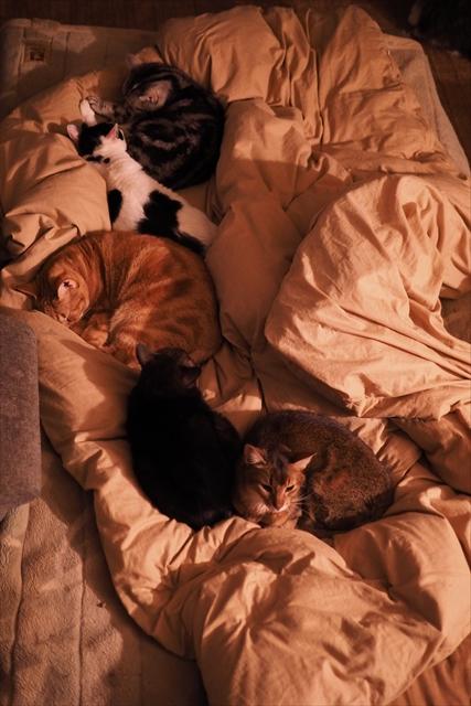 151217寝床