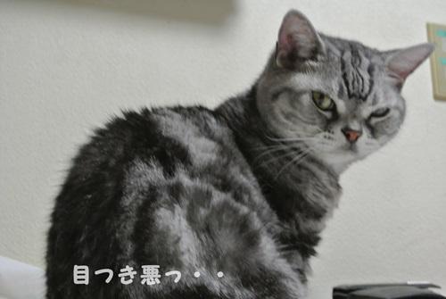 美猫が台無し