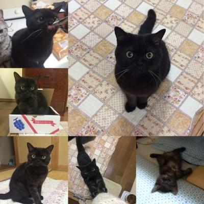 こんな可愛い黒猫いません