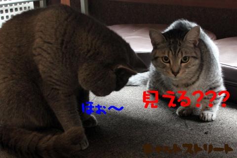 5230.jpg