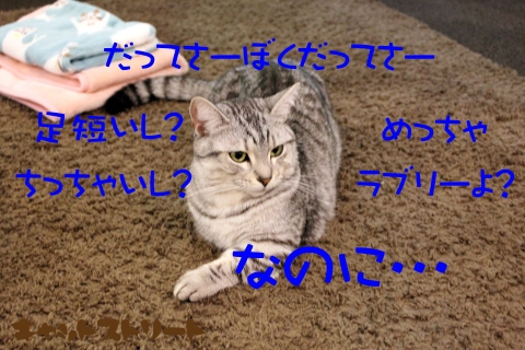 5311.jpg