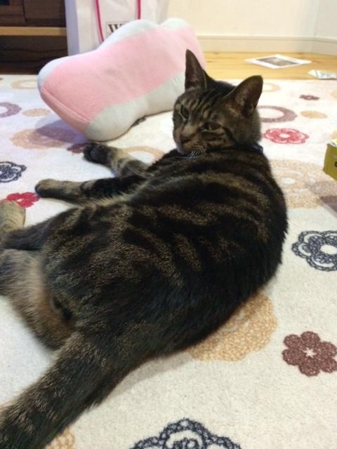 桜次郎-n03