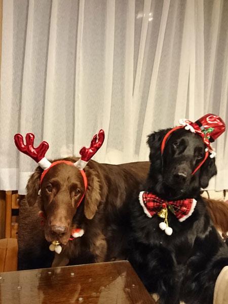 20151224クリスマスnalumana