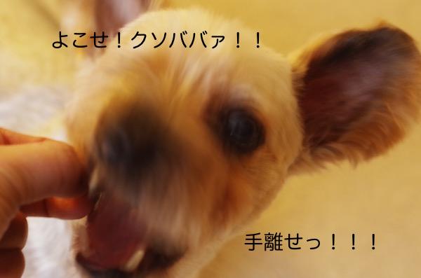 IMGP6369.jpg