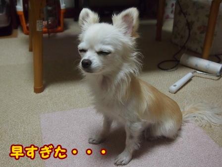 blog7130a.jpg