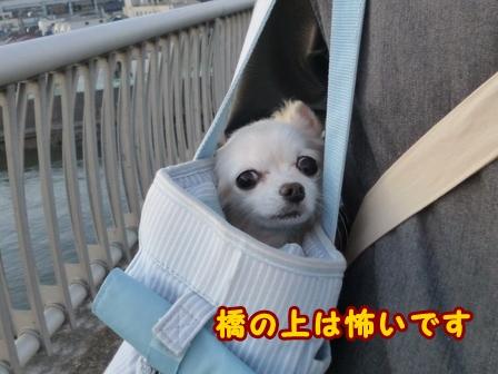 blog7189a.jpg