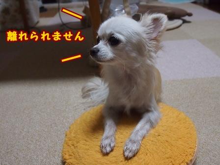 blog7229a.jpg