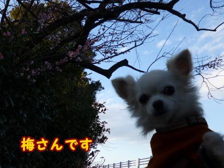 blog7279a.jpg