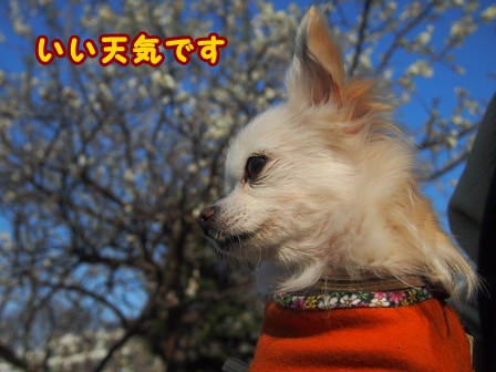 blog7285a.jpg