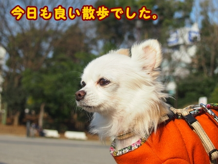 blog7286a.jpg
