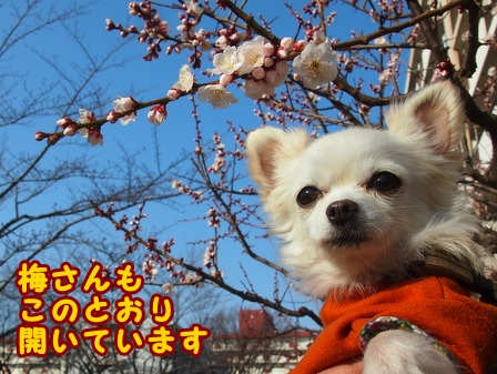 blog7288a.jpg