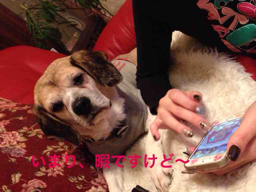 fc2blog_201602060004590a2.jpg