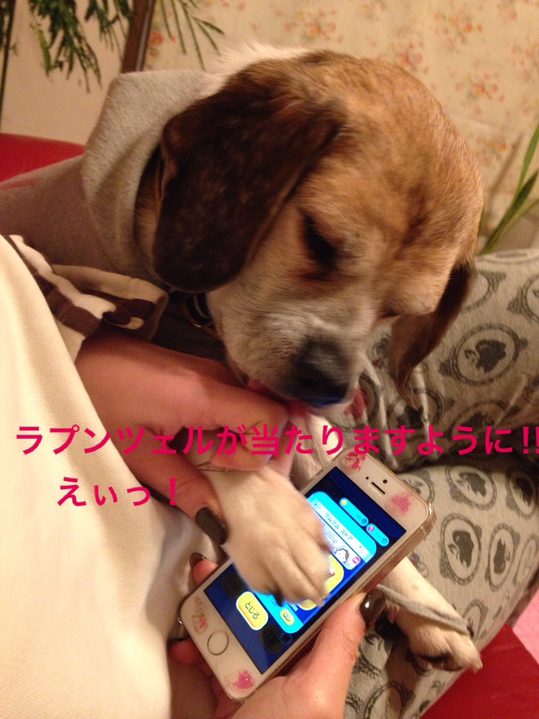 fc2blog_20160206001103f7e.jpg