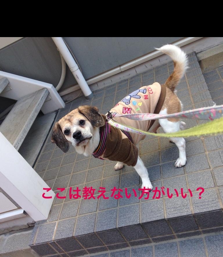 fc2blog_20160212193043a4c.jpg