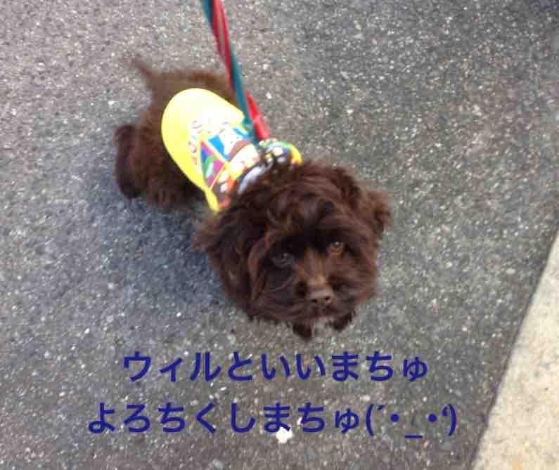 fc2blog_2016021514393737d.jpg