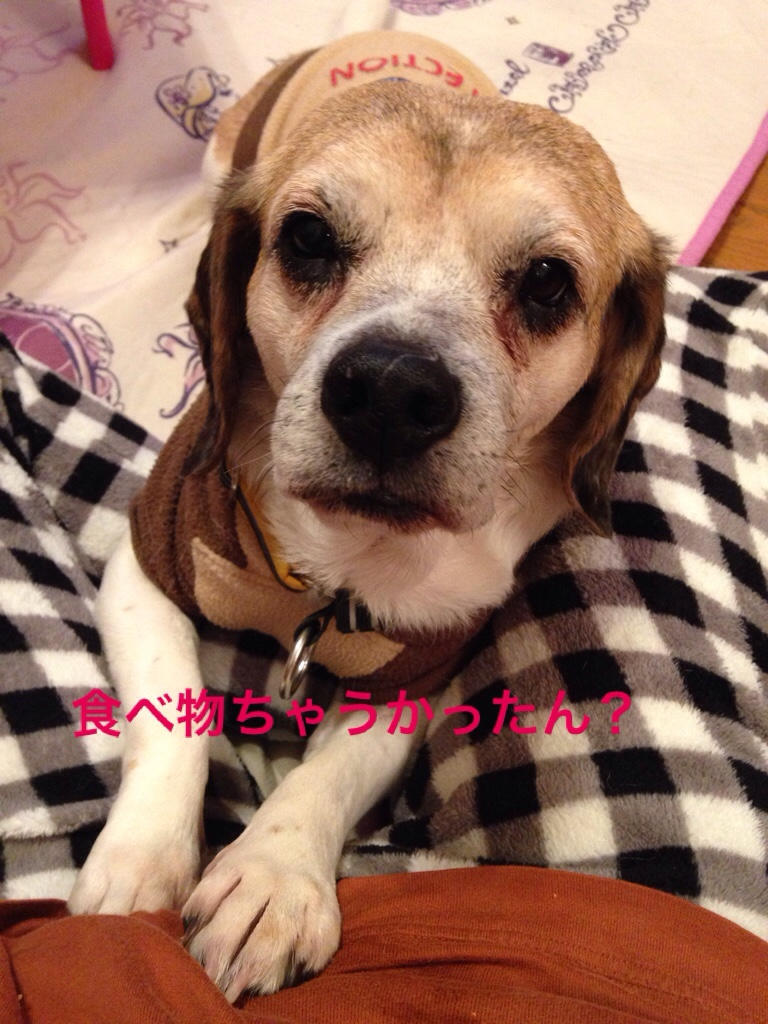 fc2blog_201602162258248b6.jpg