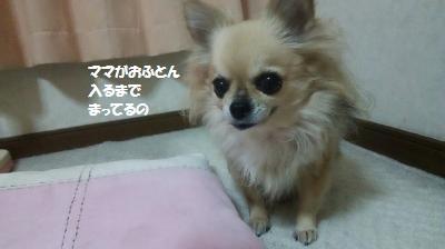DSC_0420_convert_20160122092756.jpg