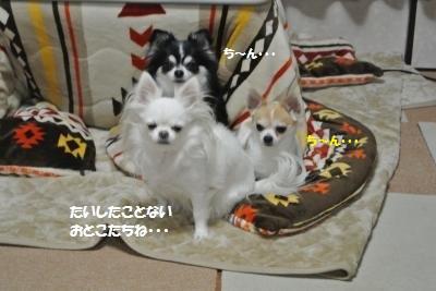 DSC_5608_convert_20160125113432.jpg
