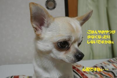 DSC_5686_convert_20160205100726.jpg