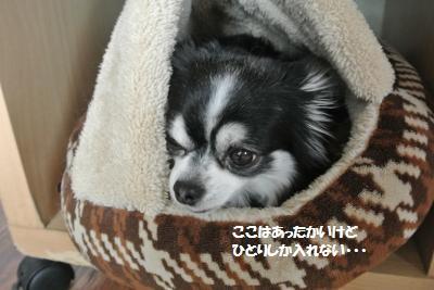 DSC_6145_convert_20160301104731.jpg