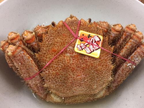 20160101Horsehair_crab-1.jpg