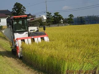 稲刈り・1