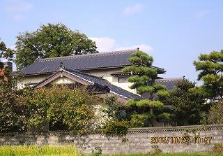大榎と屋根