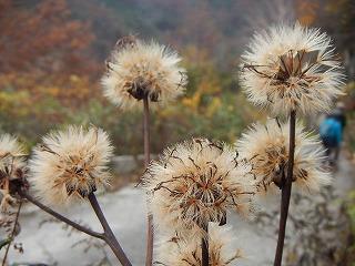 白木峰の植物・種