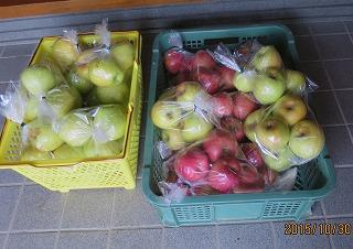 リンゴ袋詰め