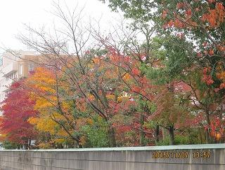 藤井先生のお庭・紅葉