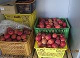 リンゴ貯蔵