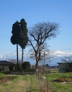 大木と立山