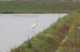 田んぼも水浸し