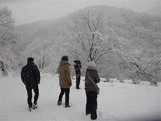 利賀の雪、
