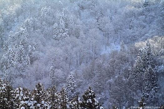 粟巣野は雪(押切さん)