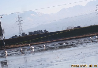 立山と白鳥