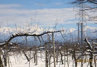 冬晴れのリン園