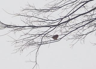 小鳥止まり木