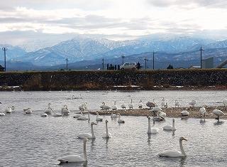 白鳥と立山・2