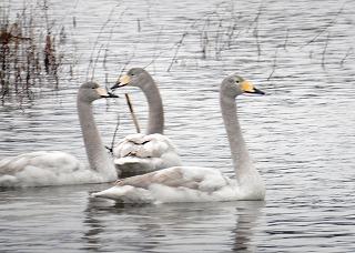 幼鳥が3羽