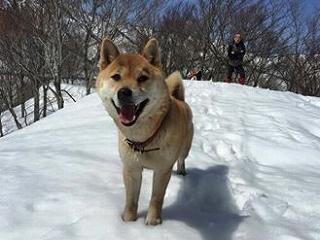 長谷の犬・ハルちゃん「わんこスペシャルに出演