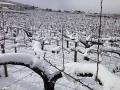 庄司梨園の雪